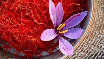 تعاون روستایی درباره رکوردشکنی تولید زعفران هشدار داد!