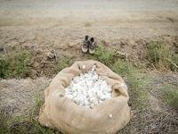 پنبه، چرخ زندگی و اشتغال در گرگان +عکس