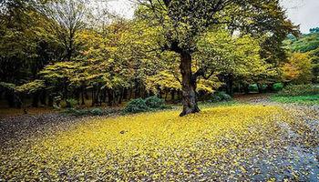 پارک جنگلی النگدره +عکس