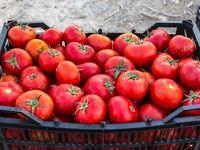 گوجه ارزان میشود/ میوه شب یلدا به میزان کافی تامین است