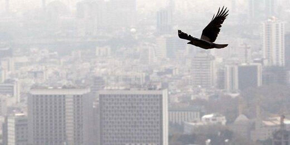 رکورد شکنی «ازن» در تهران طی تابستان امسال/ هوای پایتخت بیش از ۳۰روز آلوده بود