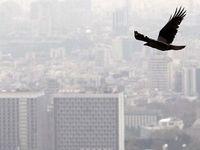 افزایش حساسیت مردم نسبت به آلودگی هوای پایتخت