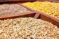 دولت باید ارز ۴۲۰۰تومانی واردات نهادههای دامی را حذف کند