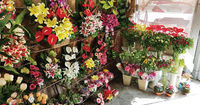 خار درپای گلفروشان