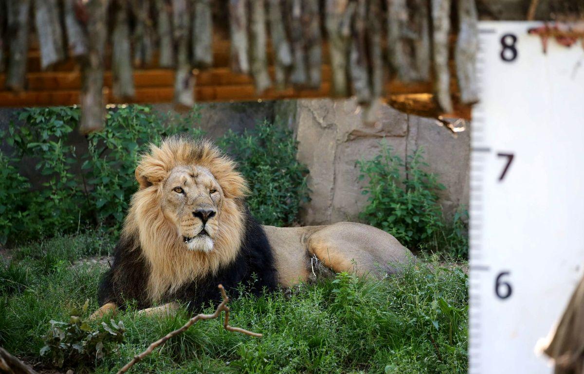 محیطزیست؛ مقصر اصلی مرگ حیوانات باغوحش