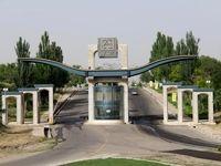 گرگ در دانشگاه زنجان!