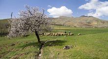 تلالو رنگها در بهار کردستان +عکس