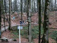 عمر جنگلها از ۵۰۰سال به ۵۰سال رسیده است