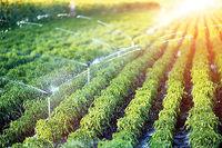 بهبود مدیریت آبیاری در بخش کشاورزی چگونه ممکن است؟