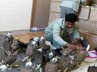 کشف ۸۴۰قطعه پرنده قاچاق