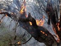 آتشسوزی ۳۵هکتار از جنگلهای بخش کجور در ۷۲ساعت اخیر
