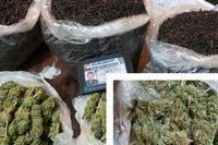 کشف ماریجوانا در بستههای چای