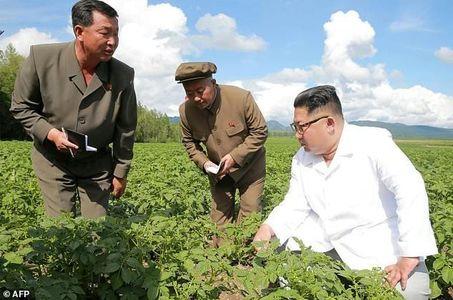 سیب زمینی برای رهبر کره شمالی مهمتر از پمپئو است!
