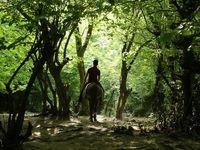 کارآفرینی خانواده روستایی با «عروس جنگل» +تصاویر