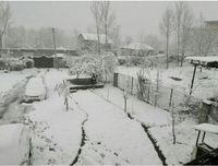 بارش برف بهاری در کلاردشت +فیلم