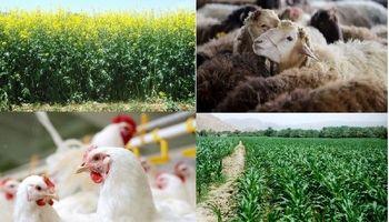 تمدید مهلت ثبت سفارش پروندههای وزارت کشاورزی
