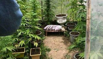 کشف گلخانه ماریجوانا در تهران! +عکس