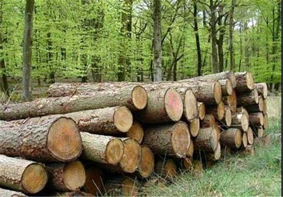 قاچاق چوب، بلای جان جنگلهای شمال