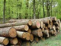 کشف 5تن چوب قاچاق در میاندورود