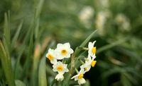 کاهش ۴۰درصدی مصرف آب با جایگزینی گیاهان زینتی بهجای چمن