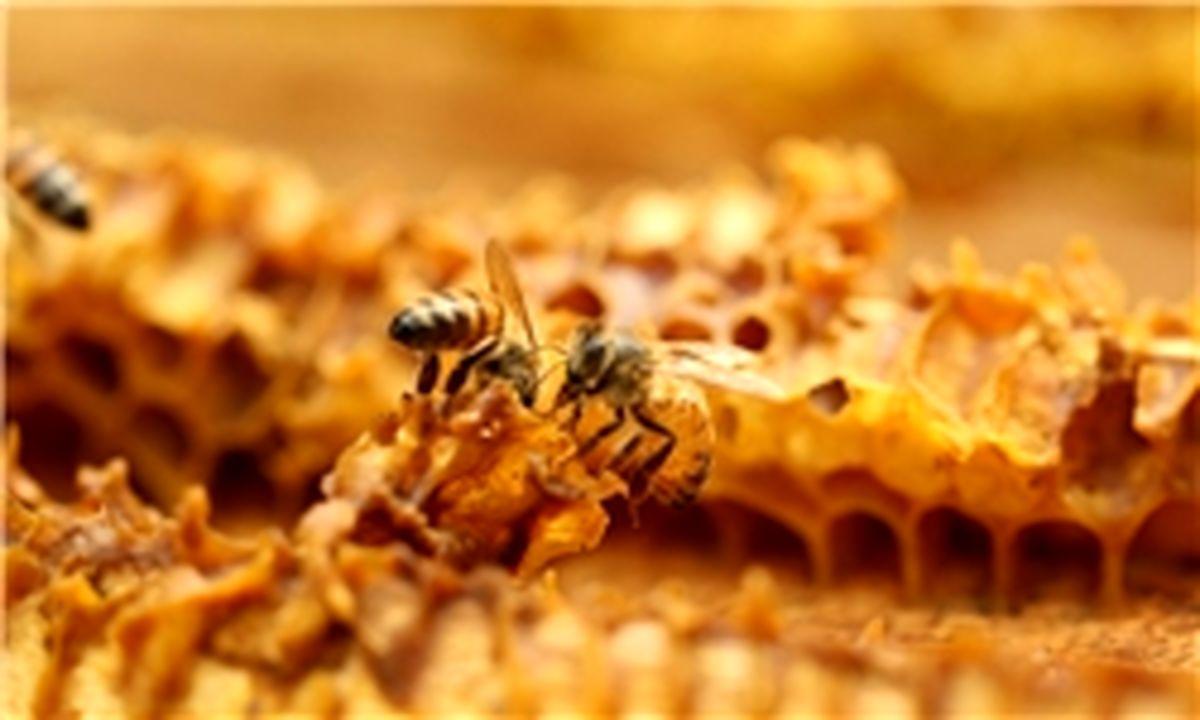 عسلهای تقلبی گرانتر فروخته میشوند! 