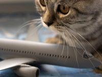 بلیط هواپیما شیراز / آشنایی با انواع بلیط هواپیما