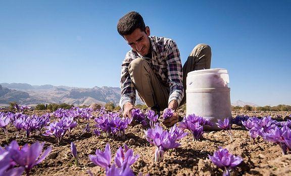 شلیک طرح خرید توافقی به قلب اردوگاه دلالان زعفران