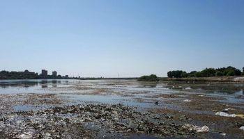 رشد جلبکها و خزهها و آلودگی رودخانه دز +عکس