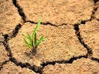 افسوس! خاکی که سالانه یک درصد بیابان میشود