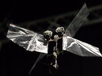 حشره رباتیک هلندیها +تصاویر