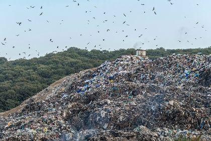 سطل زبالهای به وسعت جنگل +تصاویر