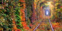 تونل عشق؛ رومانتیکترین منطقه کره زمین +تصاویر