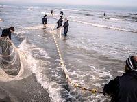 کاهش ذخایر ماهی به دلیل آلودگی