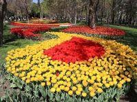 این گلها واقعی هستند! +تصاویر