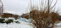 بارش برف در خلخال +تصاویر