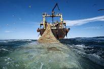 توقیف ۴شناور غیرمجاز صید ترال در آب های خلیج فارس