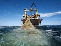 صید ترال به مدت ۲سال ممنوع شد