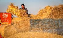 رشد ۸۰ درصدی صادرات گندم بزرگترین صادرکننده غلات جهان