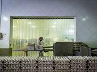 قیمت واقعی در هر عدد تخممرغ 550تومان است/ زیان مرغداران، سود دلالان!