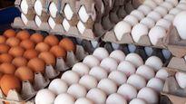تخممرغ درب مرغداری ارزان شد