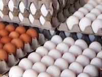 افرایش قیمت تخممرغ به ۸۰۰۰تومان، درب مرغداری