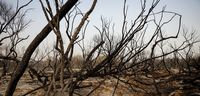 مهار آتشسوزی در جنگلهای منطقه حفاظتشده کرخه +تصاویر