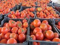 توقیف 22تن گوجه فرنگی قاچاق