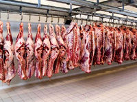 چقدر از گوشت مورد نیاز کشور در داخل تولید میشود؟