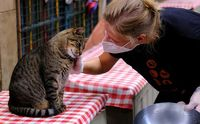 کمپ گربهها +عکس