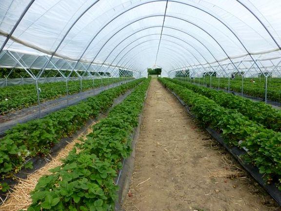 نقش گلخانهها در کاهش مصرف آب کشاورزی