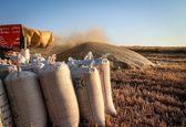 قیمت 2000تومان برای گندم منطقی نیست/ به دیوان عدالت اداری شکایت میکنیم