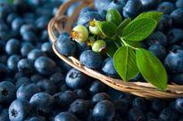 مصرف بلوبری برای سلامت قلب مفید است