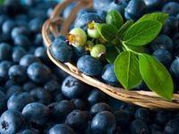 بلوبری موجب بهبود سلامت قلب میشود