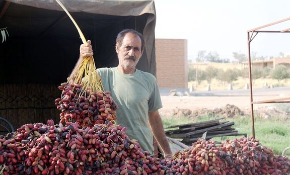 ۲۰درصد تجارت جهانی خرما در قبضه ایران
